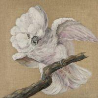 Perroquet - huile sur toile pinceau 40x40 cm